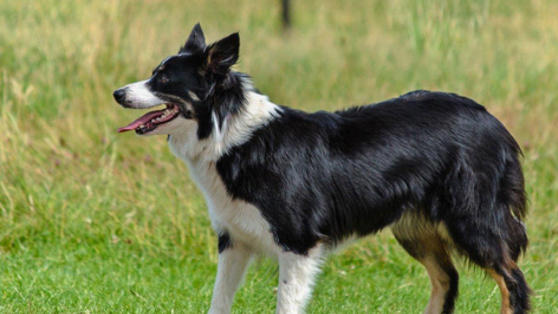 Zdjęcie przedstawiające psa